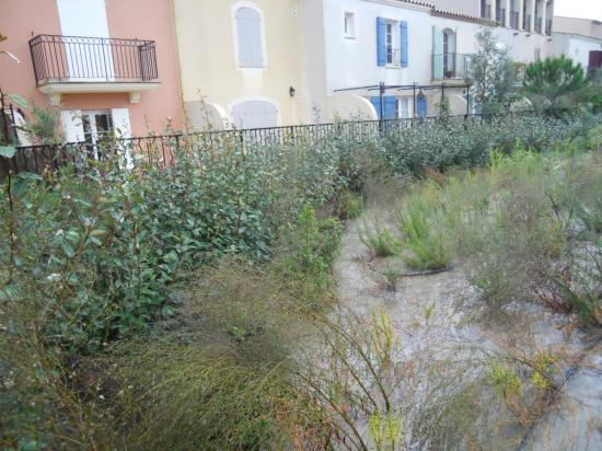 les plantations devant le jardin inondé
